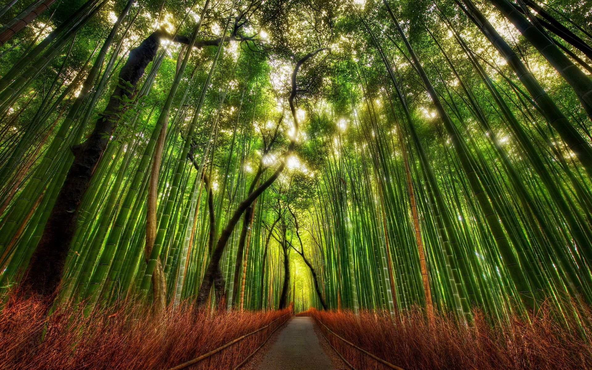 7036219-bamboo-forest-road.jpg