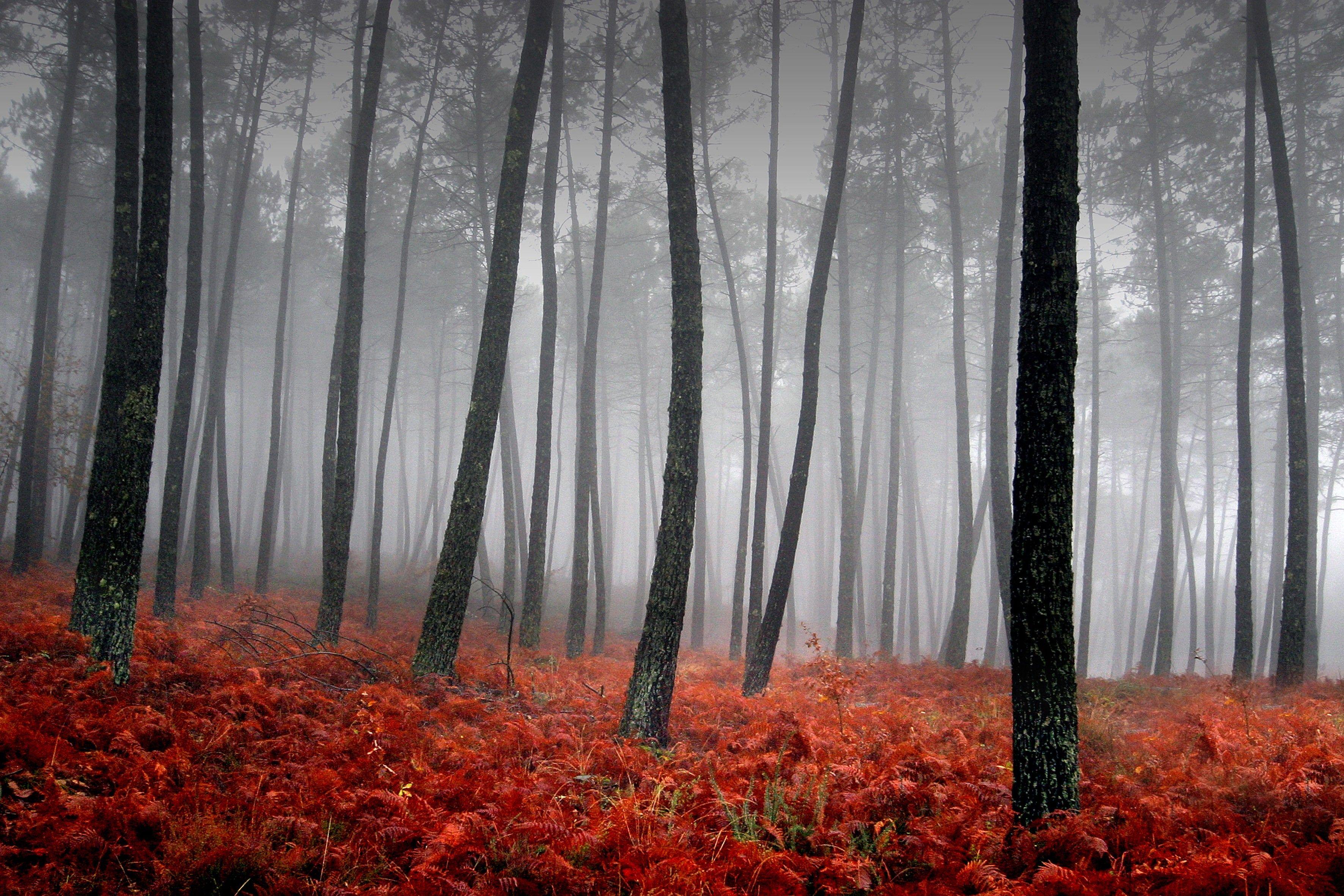 fog-trees-red-grass-autumn.jpg