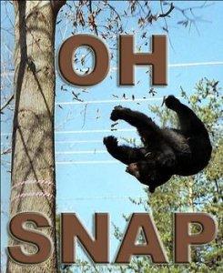 bear_ohsnap_zpsd194a7fd.jpg