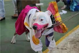 bullclowndog.jpg